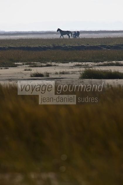 Europe/France/Picardie/80/Somme/Baie de Somme/Saint-Quentin-en-Tourmont : Parc du Marquenterre - Voiture à cheval