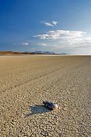 Seagull on alkali flats of Black Rock Desert National Conservation Area. Nevada