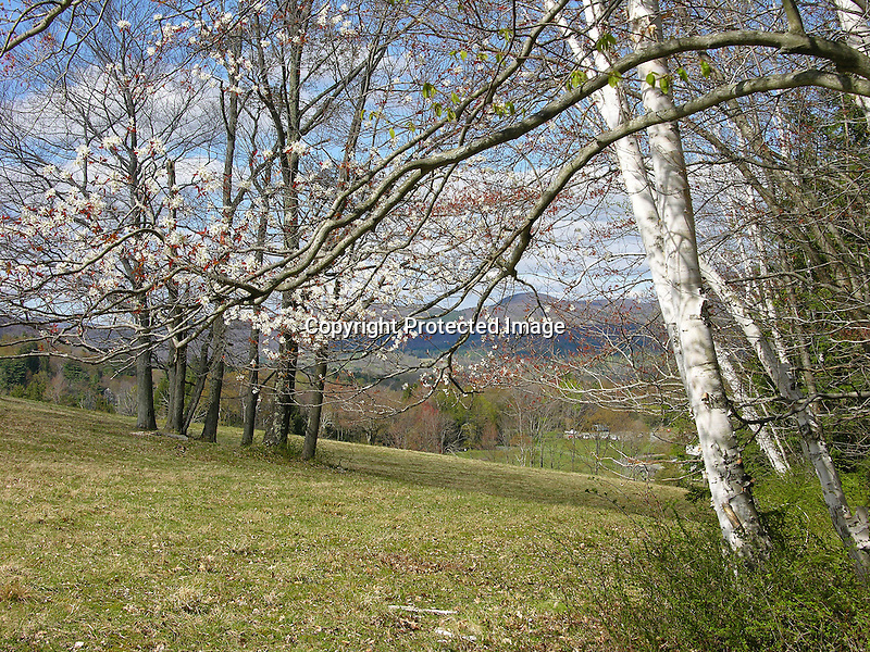 Spring Hilltop View in the Berkshire Mountains, New England, USA