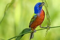 Song Birds Ducks and Turkeys