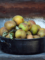 Deutschland, Bayern, Oberbayern, Chiemgau, Sachrang: gepflueckte Aepfel von der Streuobstwiese | Germany, Upper Bavaria, Chiemgau, Sachrang: gathered apples from a traditional orchard