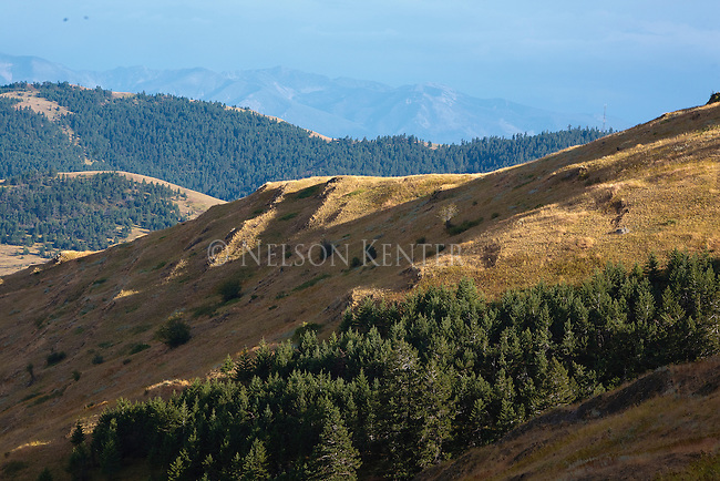 Late summer sun on the dry grassy hills in the National Bison Range. Montana