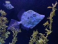Fisch im Ozeanium im Vergnügungspark Zoomarine - 25.09.2019: Zoomarine Park, Guia, Albufeira an der Algarve