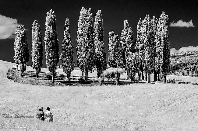 Val d'Orcia: Infra-red photo of famous Cypress Cluster.