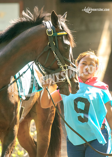 Lil' Zilla at Delaware Park  on 5/25/15