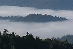 Morning fog in the Santa Cruz Mountains.  From Panorama ridge in Castle Rock SP