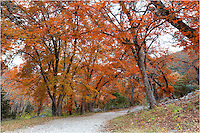 Over the river and through the woods at Lost Maples State Park and you'll see plenty of color in Novemer. Here, the maple leaves are changing from orange to red and preparing the way for winter. Located near Vanderpool, Texas, in the heart of the Hill Country, this quiet state park comes alive for a few weeks each Autumn as the colors draw visitors from across the state.