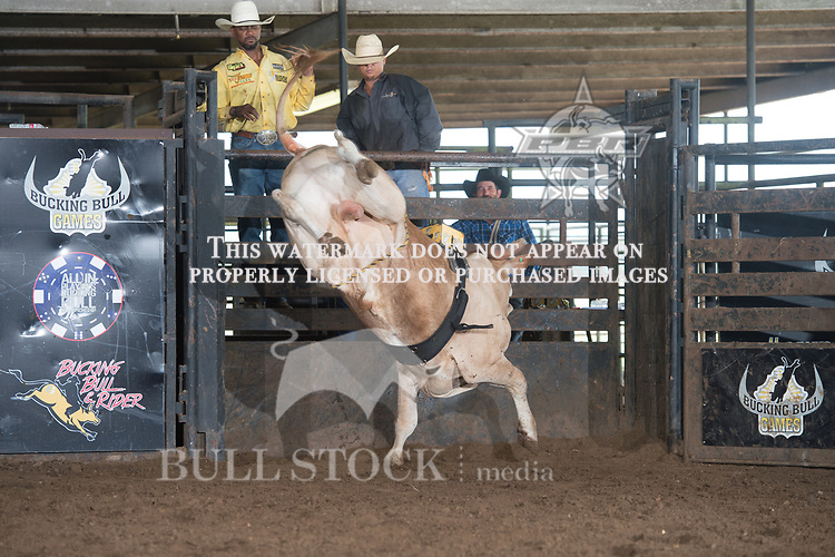 Vaquero of Tomlin/Allen/Mills/Jaynes during the Exclusive Genetics's Mid Summer Finale event in Orchard, TX - 5.27.2017. Photo by Christopher Thompson