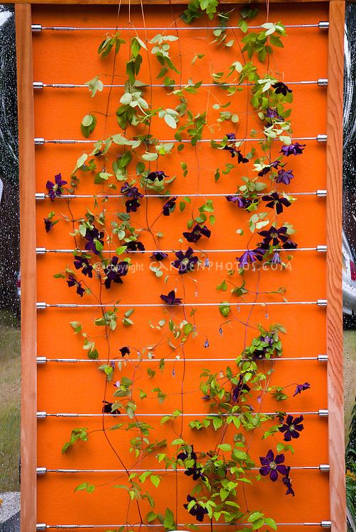 Clematis jackmanii on modernistic orange and wire trellis purple flowers