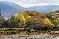 Autumn Trees, Isle Ornsay