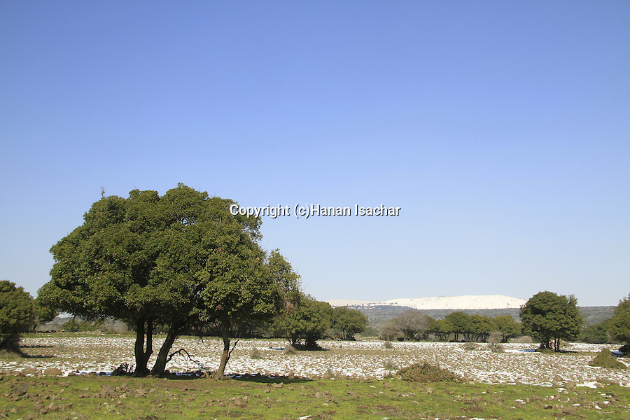 The Golan Heights, snow in Odem forest