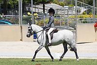 Small Hunter Pony