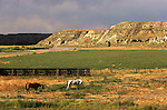 Horses by the Powder River valley off highway 14/16.