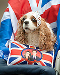 Royal Wedding William and Kate Middleton..Crowds leaving the Mall after the wedding.....pic by gavin Rodgers/ Pixel 8000.07917221968Royal Wedding William and Kate Middleton..Crowds leaving the Mall after the wedding..Posey King Charles Cavalier spaniel 14 years old....pic by gavin Rodgers/ Pixel 8000.07917221968