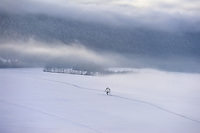 Lone tree in a misty, winter landscape