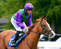 Tapisserie ridden by Ryan Moore goes down to the start  of The Wilton Homes Novice Stakes  during Evening Racing at Salisbury Racecourse on 11th June 2019