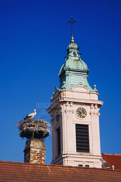White Stork, Ciconia ciconia, adult on nest by church in Rust city, Rust, National Park Lake Neusiedl, Burgenland, Austria, April 2007