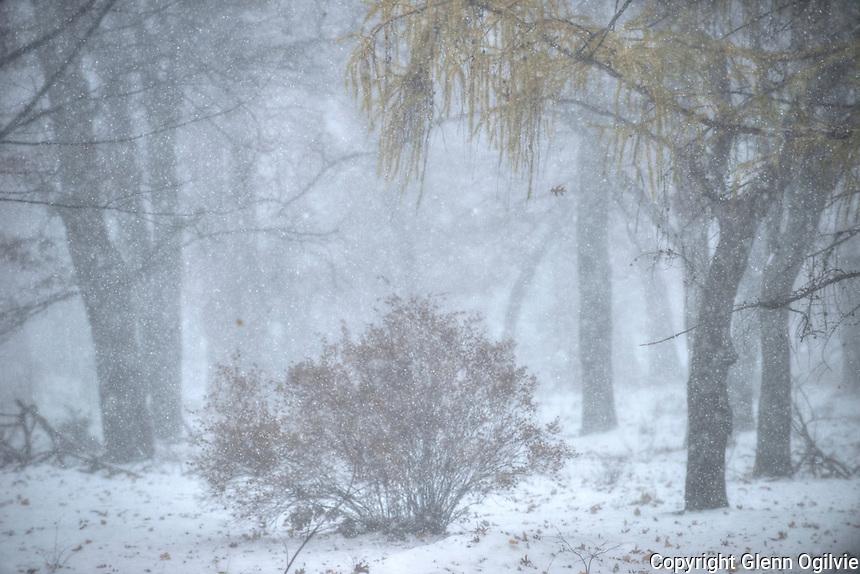 Foggy morning at Canatara Park