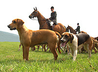 Foxhounds at Bakewell Show. Hunt.