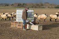 Shepherd filling a water trough for sheep<br /> &copy;Tim Scrivener Photographer 07850 303986<br /> ....Covering Agriculture In The UK....