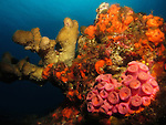 Qixingyan ('Seven Star Rock'), Taiwan -- Colorful coral.