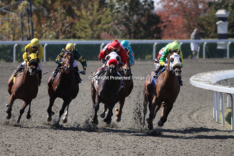 Eventual winner, Ordination with Robby Albarado (yellow cap, rail) jockeys for position with Grizzled Robert and Shaun Bridgmohan at the top of the stretch in the 2nd race at Keeneland Race Course. 10.10.2010..photo Ed Van Meter