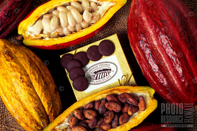 Whole and split cacao pods, showing the beans inside used to make chocolate, along with finished chocolate disks (pistoles), at Hodges Cacao Farm, Kona, Big Island