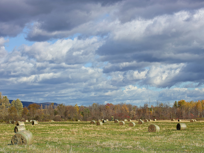 Rolled up bales of Hay