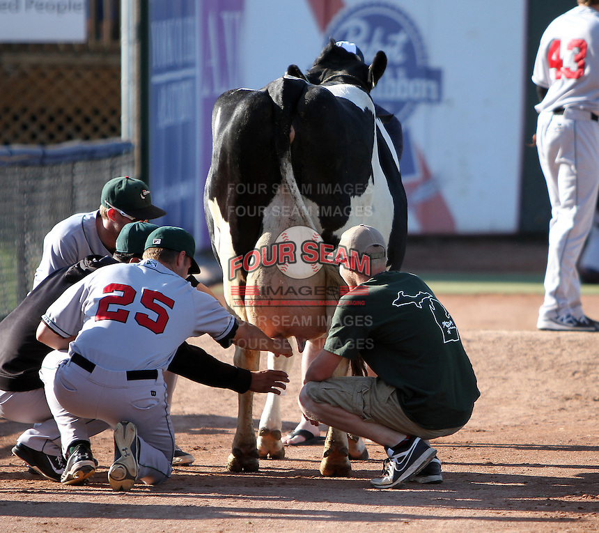 Great Lakes Loons players, including pitcher Mark Pope (25) milk a cow in the bullpen before a game against the West Michigan Whitecaps on June 5, 2014 at Fifth Third Ballpark in Comstock Park, Michigan.  West Michigan defeated South Bend 6-2.  (Emily Jones/Four Seam Images)