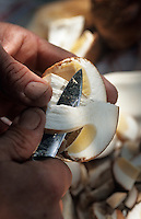 Europe/France/Limousin/19/Corrèze/St-Pardoux-la-Croisille: Nettoyage et préparation des cèpes