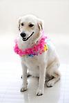 Dog celebration