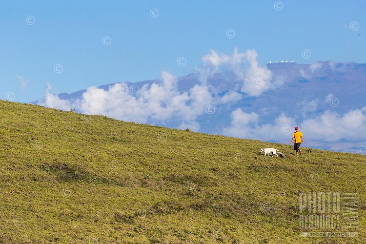 A man and his dog hike up the beautiful rolling hills of Kohala, with Mauna Kea in the background, Big Island of Hawai'i.