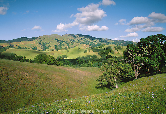 Mount Diablo, Hanging Valley, a picture perfect spring day, punctuated with purple irises.