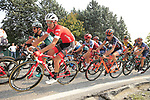The peloton including Peter Stetina (USA) Trek-Segafredo climb Colle Brianza during the 112th edition of Il Lombardia 2018, the final monument of the season running 241km from Bergamo to Como, Lombardy, Italy. 13th October 2018.<br /> Picture: Eoin Clarke | Cyclefile<br /> <br /> <br /> All photos usage must carry mandatory copyright credit (© Cyclefile | Eoin Clarke)