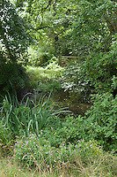 An overgrown pond in a shady corner of Great Dixter