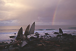 Rainbow and surfboards at Big Flat, Humboldt County, California
