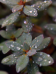 Waterdrops on trees, bushes, plants and weeds.   ©2012. Jim Bryant Photo. ALL RIGHTS RESERVED.