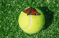 Moscow, Russia, 15 th July, 2016, Tennis,  Davis Cup Russia-Netherlands, First rubber: Butterfly on tennisball<br /> Photo: Henk Koster/tennisimages.com