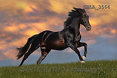 Bob, ANIMALS, REALISTISCHE TIERE, ANIMALES REALISTICOS, collage, horses, photos+++++,GBLA3564,#a#