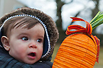March, 23, 2013 - Merrick, New York, U.S. - 10-month-old boy looks surprised to see the giant carrot the Easter Bunny brought at the Annual Eggstravaganza at Fraser Park.