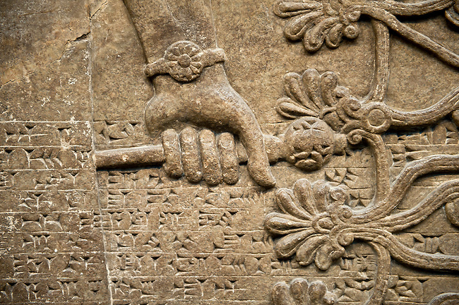 Assyrian relief sculpture panel detail of a hand holding a mace.  From Nimrud, Iraq,  865-860 B.C North West Palace.   British Museum Assyrian  Archaeological exhibit.
