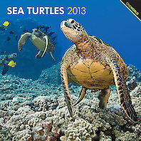 BrownTrout Turtles 2013 Calendar, cover use, USA, Image ID: Green-Sea-Turtle-0042