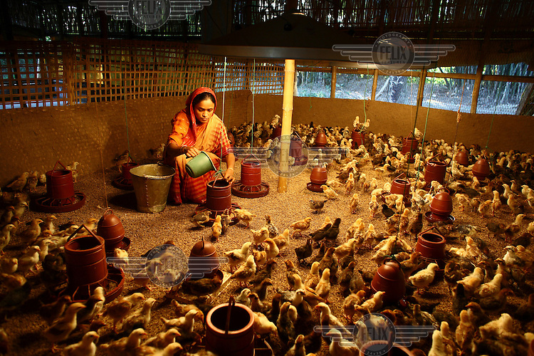 37 year old Mina Begum at her chicken farm in Boldi. She participated in an IFAD (International Fund for Agricultural Development) training programme on proper chicken vaccination techniques and received a microfinance loan...