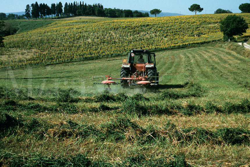 A tractor cutting tall grass in a Tuscan agricultural landscape. Tuscany, Italy.