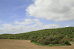 Israel, Lower Galilee, a view of Nahal Zippori from Hasolelim forest