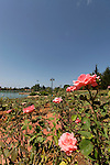 Israel, Sharon region. The Rose Garden at Park Ra'anana