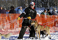 Sunday, March 4, 2012  A volunteer dog handler helps get dogs to the starting ling at the restart of Iditarod 2012 in Willow, Alaska.