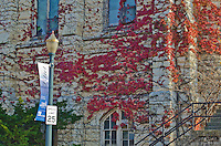 St Mary Carmelite Church is covered with autumn colored Ivy, Downtown Joliet, Illinois