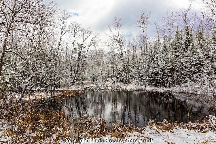 Snow-covered wetland in Wisconsin