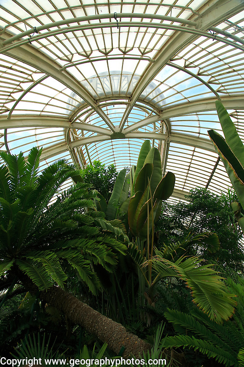 Inside The Palm House at Royal Botanic Gardens, Kew, London, England, UK